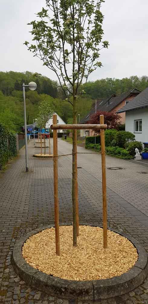 Pflanzkübel_Weinähr